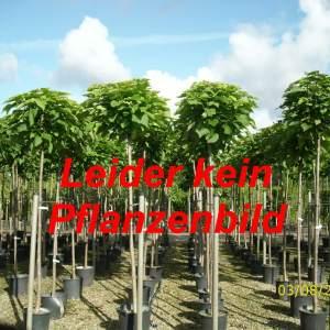Kein Pflanzenbild