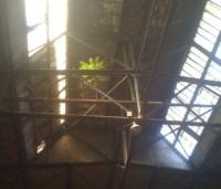 Pflanze wächst auf Stahlsparren in Industriehalle