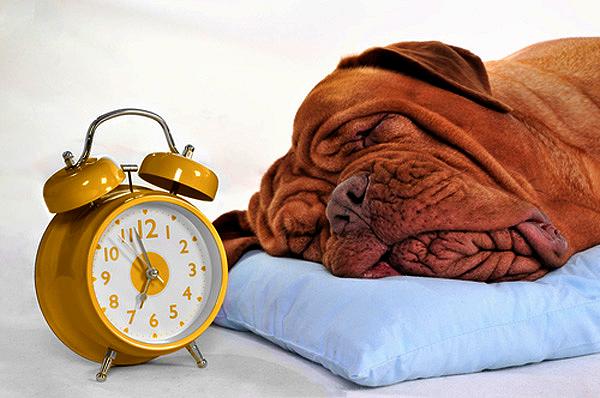 cani-tempo-orologio-dog-time-hour-clock