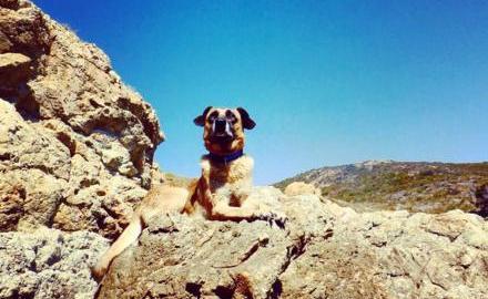 attivazione mentale nel cane