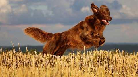 Forasacchi, ecco come proteggere il proprio cane