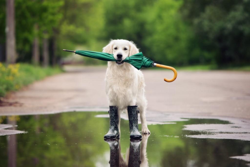 cani e pioggia