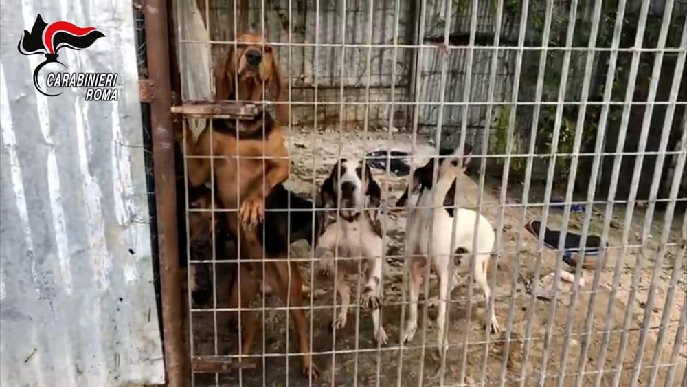traffico di cani rubati