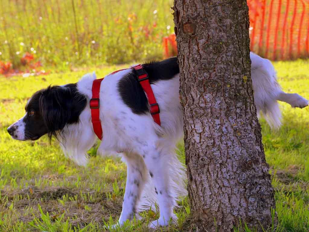 Pipì dei cani: secondo il Comune di Chivasso si cancella con l'acqua.