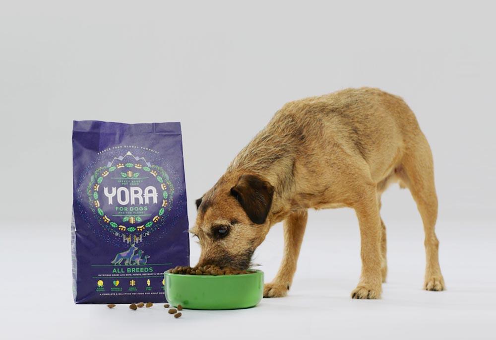 Il Cibo Per Cani A Base Di Insetti Fa Male Bausocialit