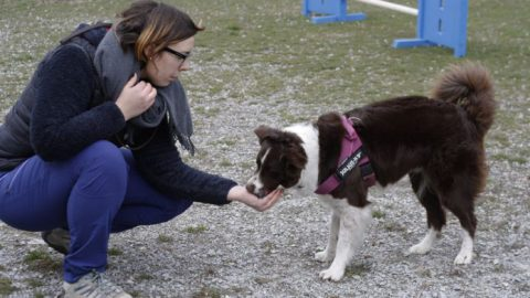 gestione del cane