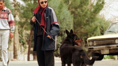 Teheran contro i cani