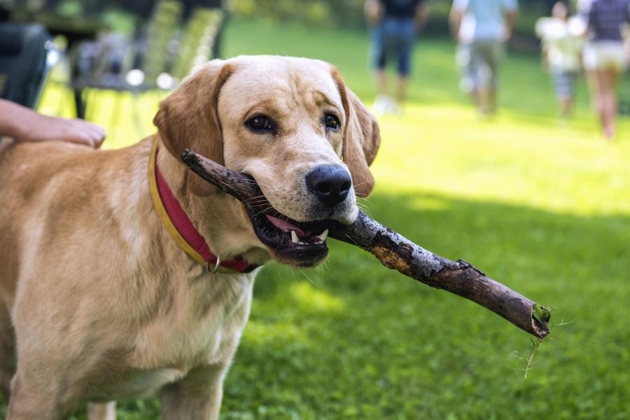 Corso di formazione per proprietari di cani a Vercelli.