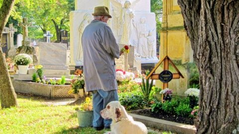 cani al cimitero