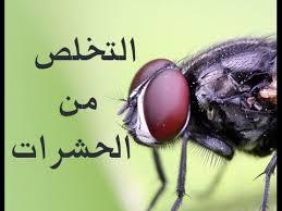Photo of طرق التخلص من كافة حشرات المنزل