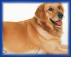 dogs drinking alkaline water have a thicker fuller brighter coat