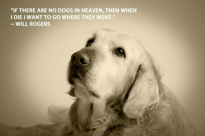 Dog Heaven Quotes Sayings And