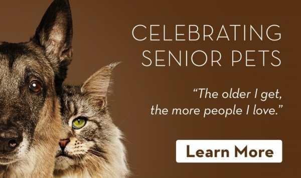 free cat sudbury ontario # 18