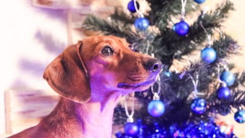 All I Want for Christmas is a Puppy: Things to Consider Before Adopting a Pet This Holiday Season