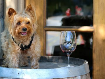 Pawsport Napa Valley: Dog-Friendly Wine Tasting for a Doggone Good Cause
