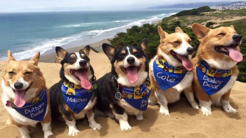 Brace Yourself for Infinite Cuteness at NorCal Corgi Con 2017