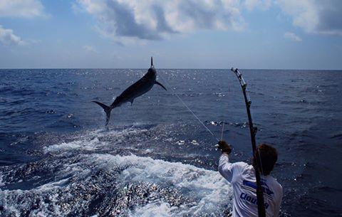 Game Fishing Port Stephens