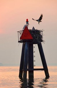 Chesapeake Bay channel marker with Osprey nest