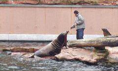 Robben im Tiergarten Nürnberg