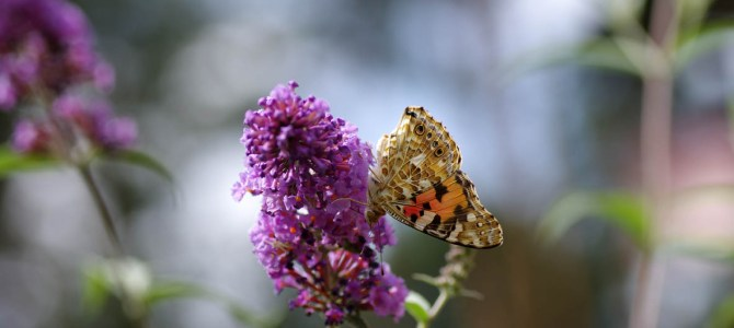 Schmetterlinge, Bienen und Sommerblumen