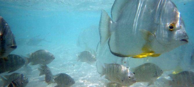 Schnorcheln auf den Seychellen – zerstörtes Paradies