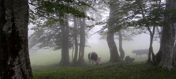 Mystischer Jura: Schlucht des Creux du Van und ein Treffen mit der Absinth-Fee