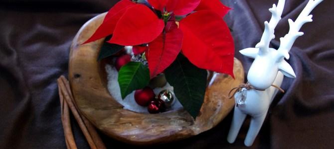 Klassische Weihnachten mit dem Weihnachtsstern