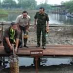 Update: Indonesiens Präsident besucht Mangrovenwald