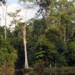 Auf Sumatra herrscht Artenfülle trotz intensiver Forstwirtschaft