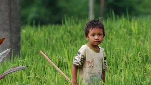 Ein Junge jagt im Reisfeld nach Heuschrecken © Jessica Braun Fotoquelle zeit.de