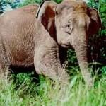 Touristin durch Elefant getötet