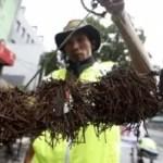 Die Nägel Sammler von Jakarta