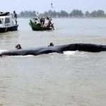 Ein gestrandeter Wal in der Nähe von Jakarta Foto: The Jakarta Post