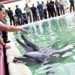 Freiheit für Delphine