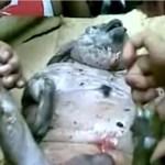 Wieder mysteriöse Kreatur in Indonesien aufgetaucht