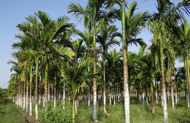 Der Fluch des Palmöls