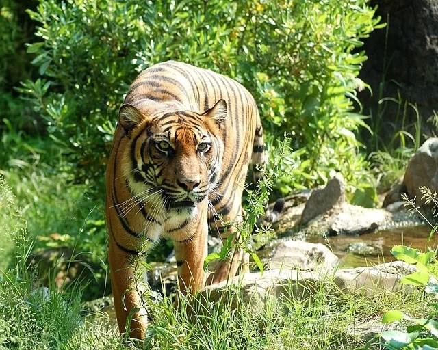 Sechs verdächtige Wilderer verhaftet