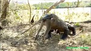 Komodowaran verschlingt ganzen Affen / Screenshot YouTube