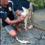 Nach Katastrophe in Papua, angeblich Süßwasserhaie entdeckt