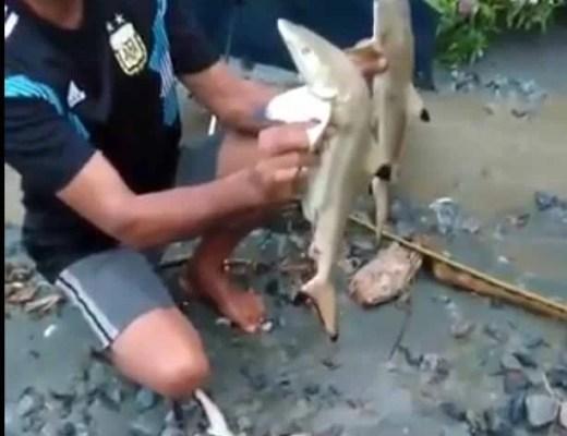 Nach Katastrophe in Papua, angeblich Süßwasserhaie entdeckt / Screenshot: Twitter