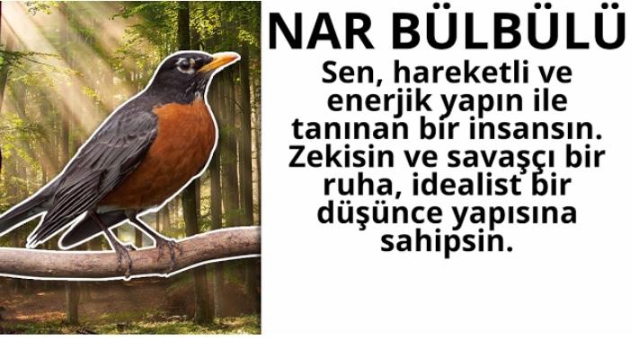 NAR-BULBULU.jpg
