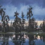 A,Winter,Sunset,On,Moss,Covered,Cypress,Trees,In,Lake