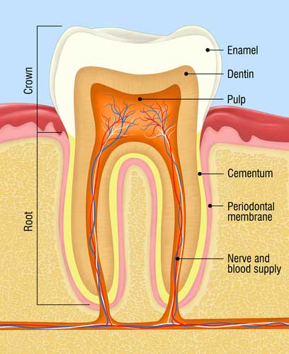 Root Canal Fremont Dentist Jaspreet Harika
