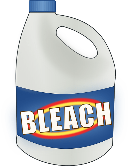 Can Bleach Kill Mold?