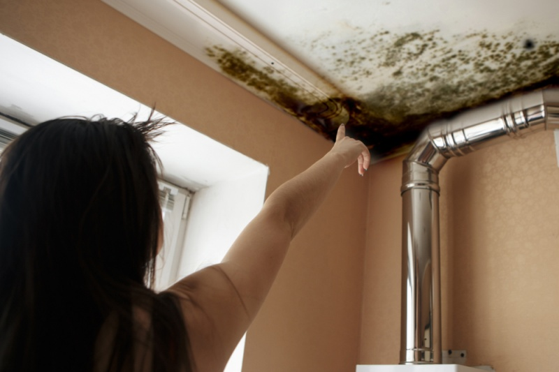 How Does Mold Affect Your Health?