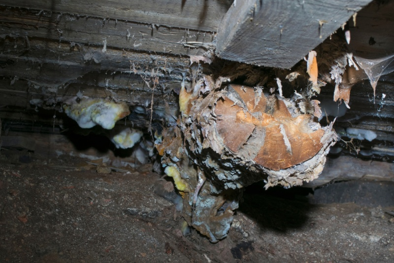 Common Signs You Have An Attic Mold Problem