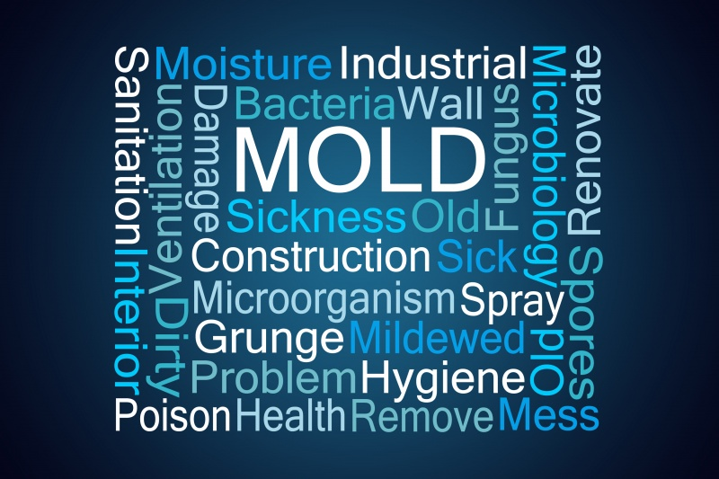 Spring Months in Massachusetts Can Lead to Mold Infestations- Combat it with Bay State Mold Removal