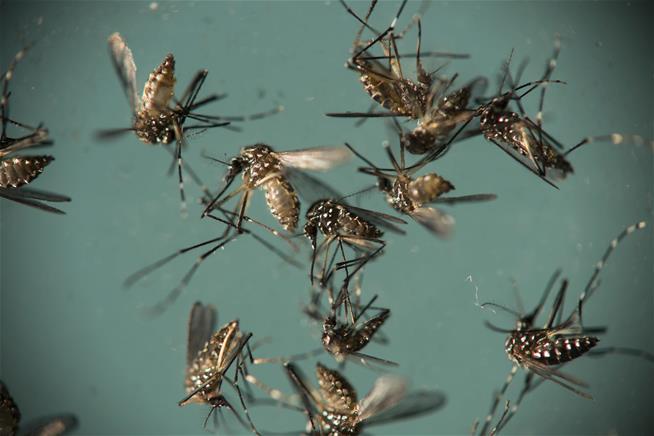 Nasty new Zika virus case reported in Texas