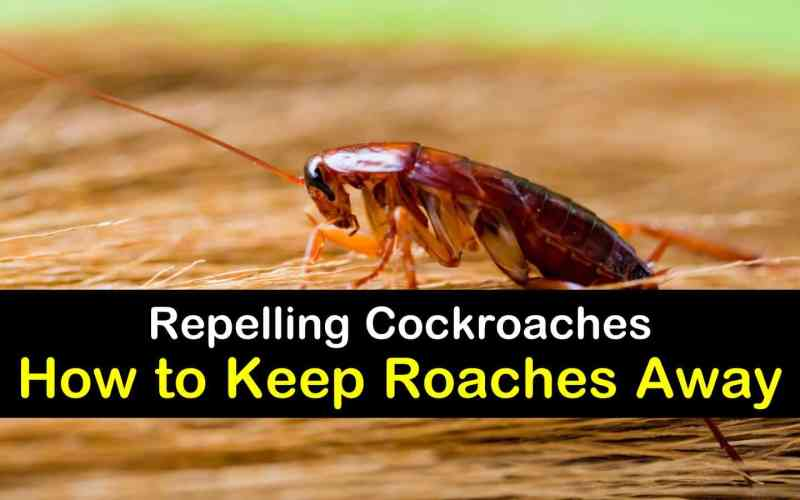 [How to Guide] Natural home solutions to fend off roaches and other bugs