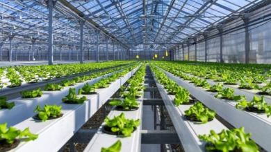 ForFarming, pesticide-free smart agriculture gets new TL 2.4 million investment 9